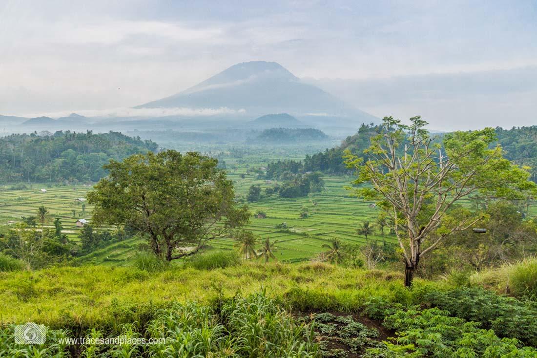Reissterrassen Tirtagangga Ausblick von Bali Asli