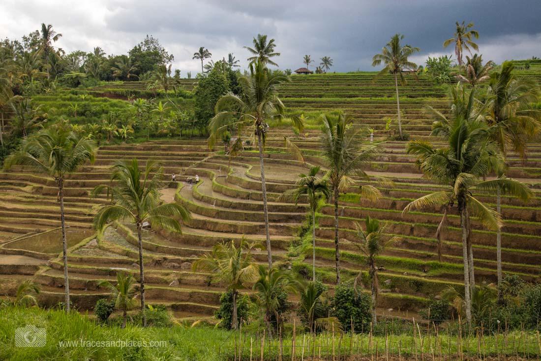 Reissterrasse von Jatiluwih in Bali