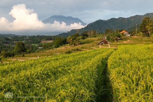 Die Reisterrassen von Sidemen mit dem Vulkan Gunung Agung