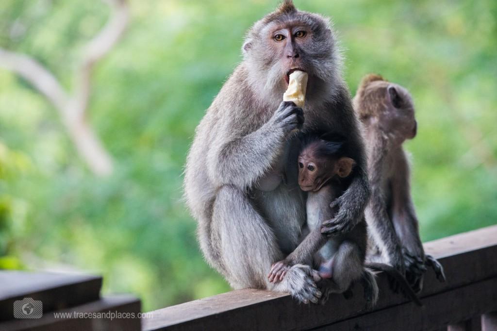 affenwald affe mit Banane und junges