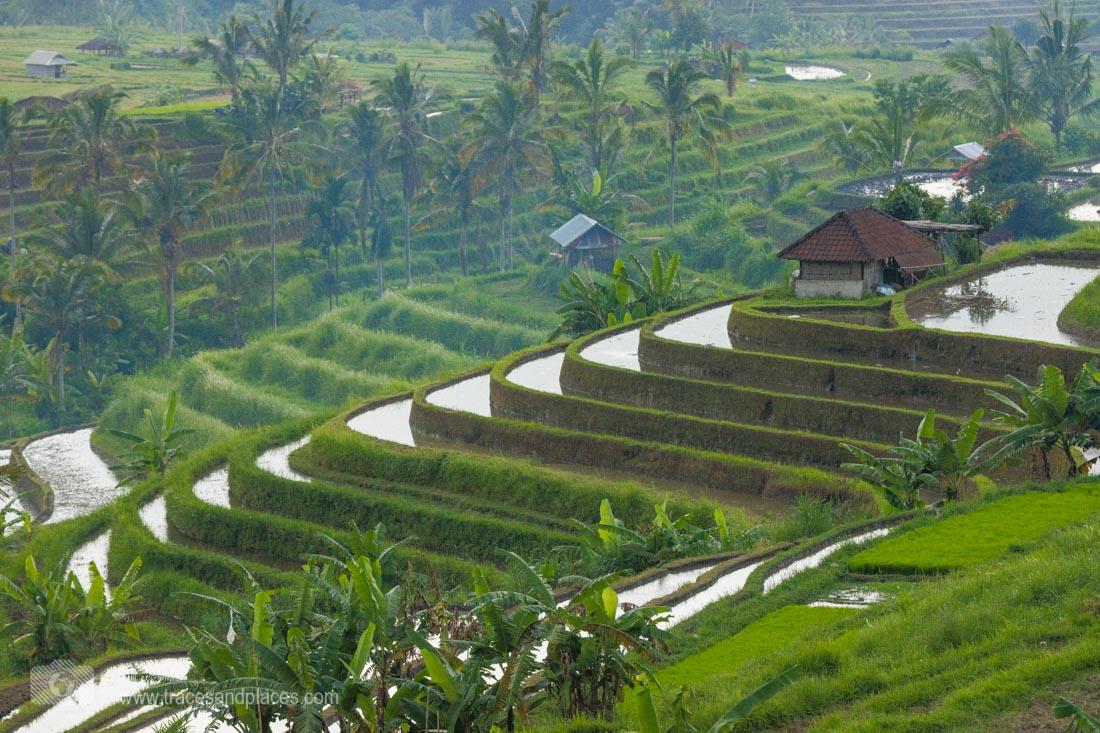 Übersicht über die Reisterrassen von Jatiluwih in Bali