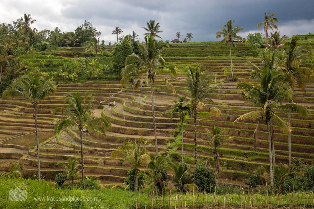 Die Reisterrassen von Jatiluwih
