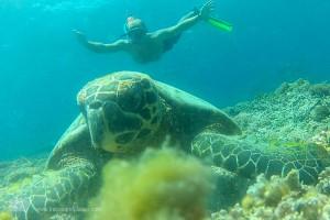 Schildkröte und Schnorchler