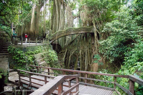 Affenwald in Bali Ubud Bruecke