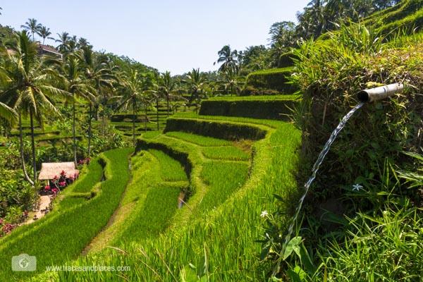 Reisterrassen von Tegalalang Bali
