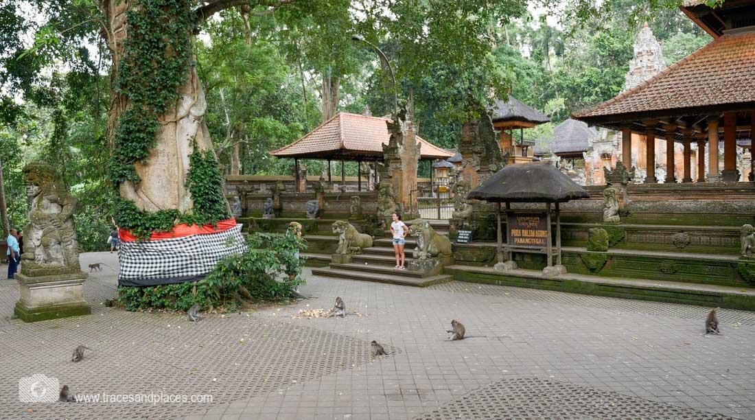 Affenfwald in Ubud mit Tempel
