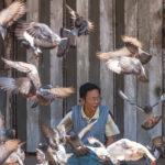 Mann füttert Tauben in Mawlamyaing