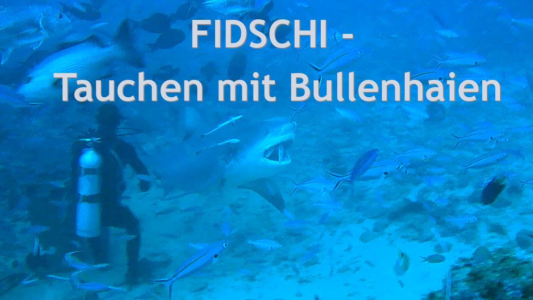 Tauchen-mit-Bullenhaien-in-Fidschi-Beqa-Lagoon